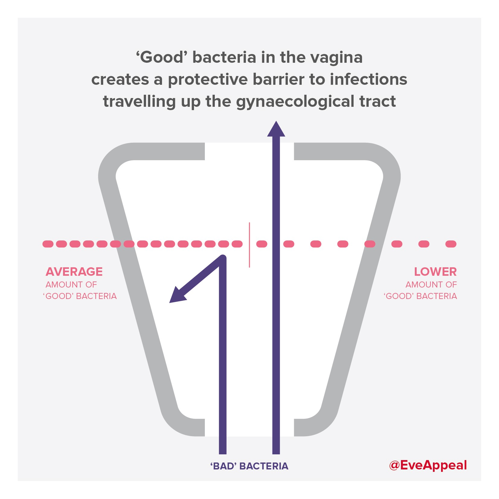Breaking Research News The Good Bacteria In Your Vagina May Help To Prevent Ovarian Cancer The Eve Appeal